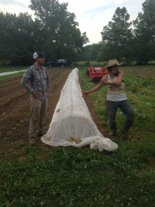 Chris and Lisa show off the fabric-covered hoops over the eggplants.  This helps keep eggplant flea beetles off of the plants and gives the eggplants room to grow under the hoops.