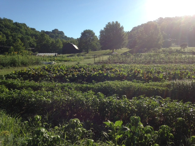​My garden, Dark Wood Farm, in full bloom in July.