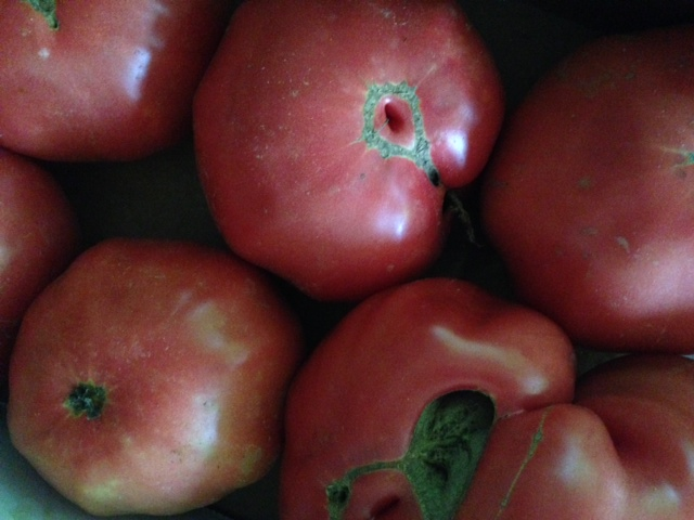 Granny Cantrell's German Pink tomatoes