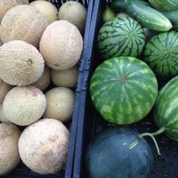 Melon Mistakes