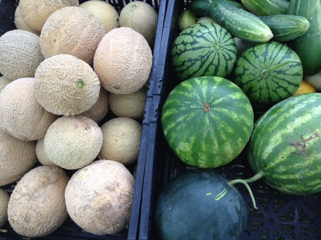 Dark Wood Farm melons