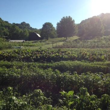 Dark Wood Farm FAQ
